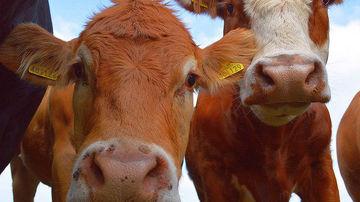 Impactul cresterii animalelor asupra mediului