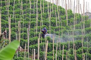 fructele pesticide