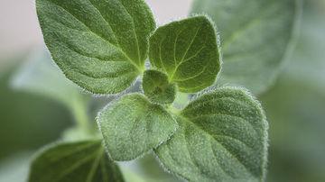 9 ierburi aromatice si condimente cu beneficii dovedite pentru sanatate