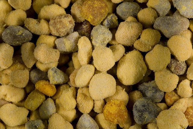 imbatranire polen
