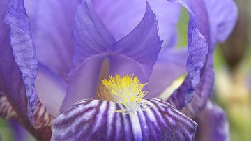 Limbajul florilor, al ierburilor aromatice si al arborilor - 71 de plante si semnificatia lor