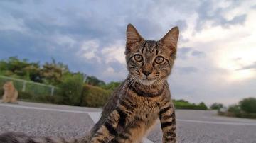 Limbajul cozilor la pisici