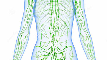 Ce trebuie sa stii despre sistemul limfatic