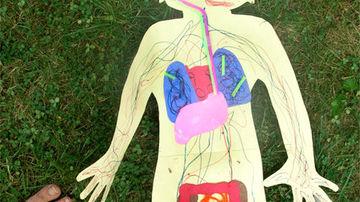 11 lucruri surprinzatoare despre sistemul digestiv