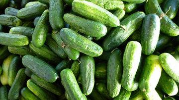 Castravetii, alimentul perfect pentru vara