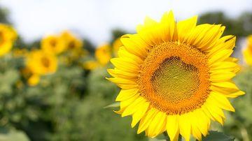 Noi studii despre inteligenta plantelor ce probabil iti vor schimba perceptia asupra acestora