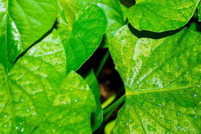 dureri articulare frunze verzi