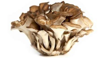 Principalele ciuperci medicinale si proprietatile lor