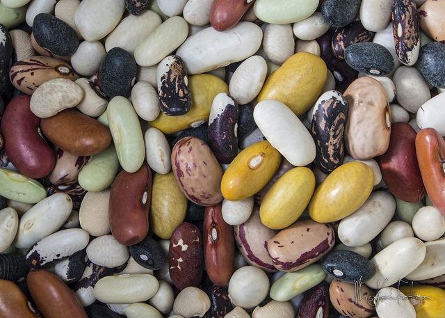 leguminoasele si cerealele