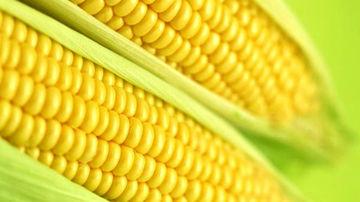 Impactul modificarilor genetice asupra nutrientilor din plante