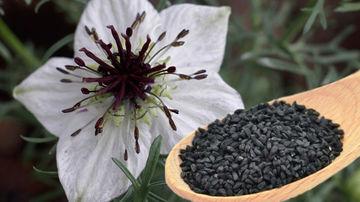 Proprietatile vindecatoare ale uleiului din chimen negru pentru piele