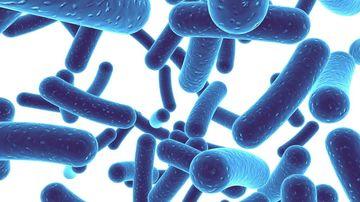 Ce sunt probioticele si rol au in mentinerea sanatatii ?