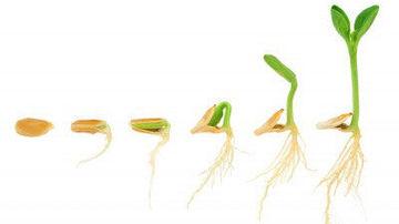 Proprietatile curative ale semintelor de dovleac