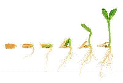 Germinarea semintelor