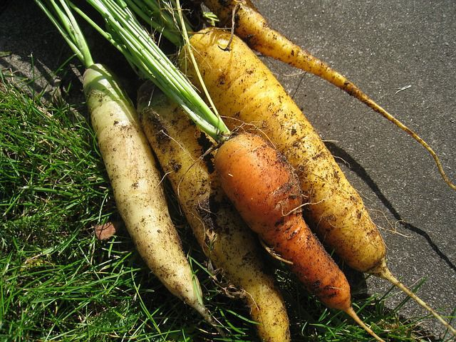 morcovi legume frunze verzi
