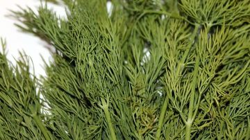 Mararul - o planta aromatica cu potentiale efecte terapeutice
