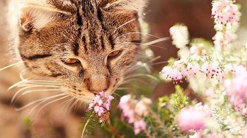 5 moduri in care comunica animalele