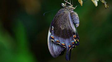 Parabola coconului de molie: Cum ne ajuta greutatile vietii sa crestem