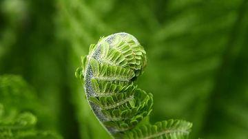Plantele pot gandi, alege si memora, potrivit studiilor