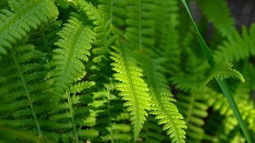 3 plante ce reduc cu pana la 60% concentratia de microbi, toxine, mucegai si bacterii din aer.