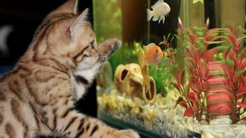 Animalele ne ajuta sa fim mai sanatosi !