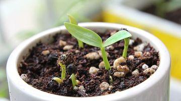 7 legume care pot creste din nou