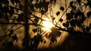 Ştiinta confirmă: şi copacii se odihnesc noaptea
