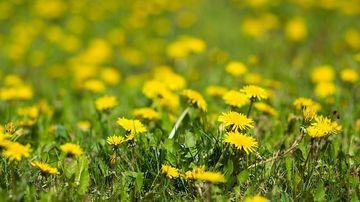 Buruienile: plante invazive sau uzine de nutrienti?