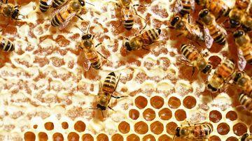 Ce trebuie sa stii pentru a identifica mierea contrafacuta