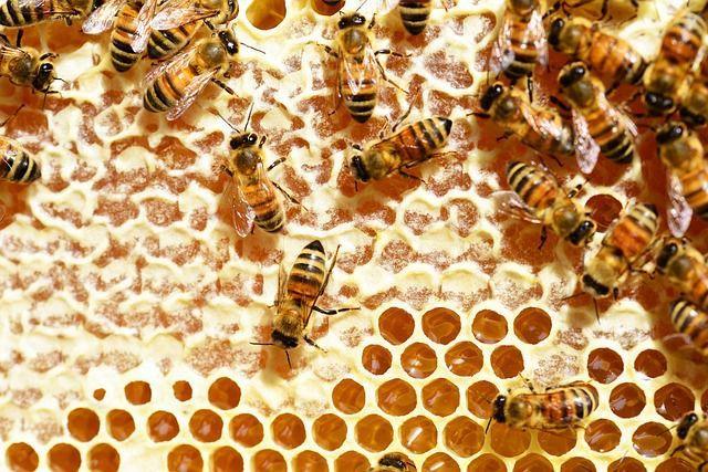 identifica mierea contrafacuta