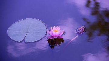 5 lucruri care fac experienta meditatiei mai placuta