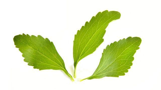 stevia planta care ajuta sa scapi de dependenta de nicotina