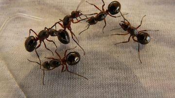 7 remedii naturale pentru a alunga insectele nedorite