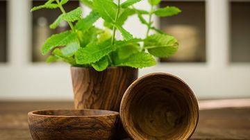 6 plante medicinale pe care le poti cultiva usor