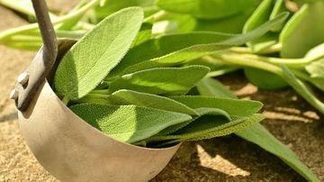 Salvia, o planta ce te poate salva