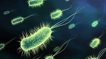 Cum optimizezi actiunea probioticelor