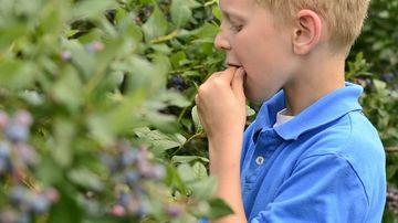 5 metode pentru a-ti incuraja copiii sa manance sanatos
