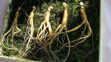 5 plante adaptogene eficiente in reducerea stresului