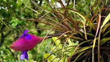 Planta potrivita semnului tau zodiacal