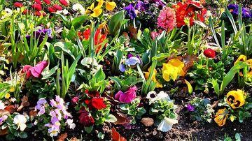 30 de flori care trebuie cultivate in asociere