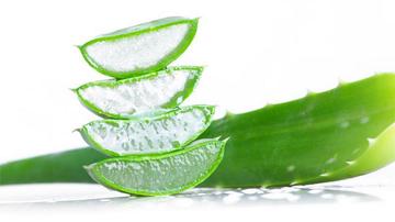 Aloe vera ajuta la vindecarea cancerului si SIDA
