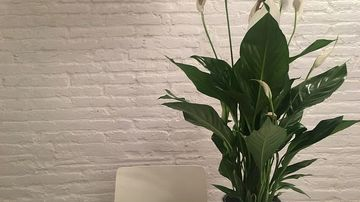 4 plante de interior care te vor face mai fericit