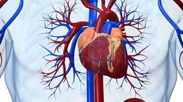 Afla care sunt cauzele spirituale ale afectiunilor sistemului circulator