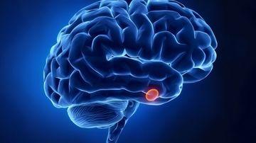 Vindecarea glandei pituitare prin nutritie si remedii naturale
