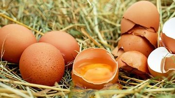 10 alimente bogate in colesterol si cum sa mentii un echilibru sanatos