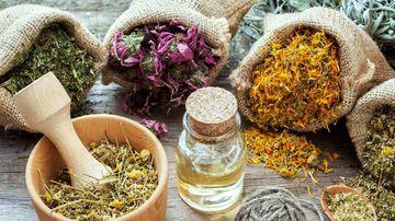 7 plante adaptogene care scad cortizolul si te ajuta sa te echilibrezi hormonal