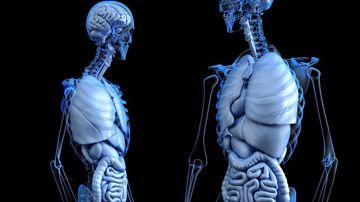 Axa creier intestin este esentiala in vindecarea unei serii importante de afectiuni