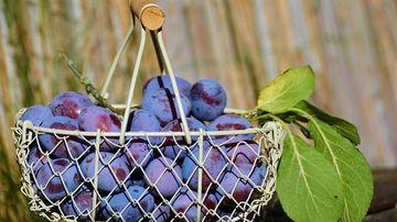 5 categorii de alimente care constipă și ce să mănânci când ești constipat