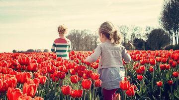 De ce şcoala ar trebui să îi înveţe pe copii sa iubeasca natura