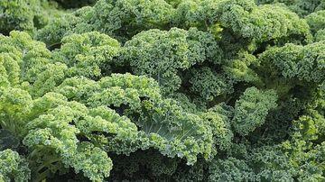 Beneficiile consumului de kale